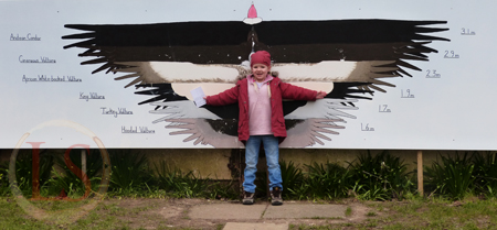 hawk conservancy childs wingspan