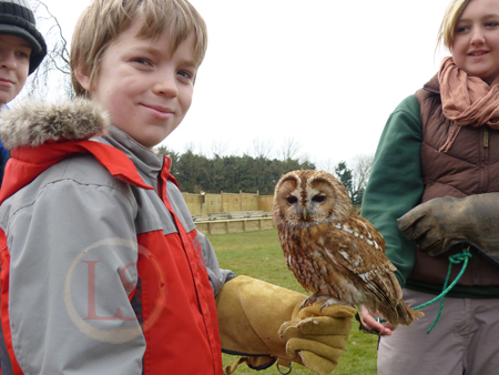 hawk conservancy handle tawny owl troy