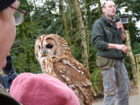 hawk conservancy owl woods talk