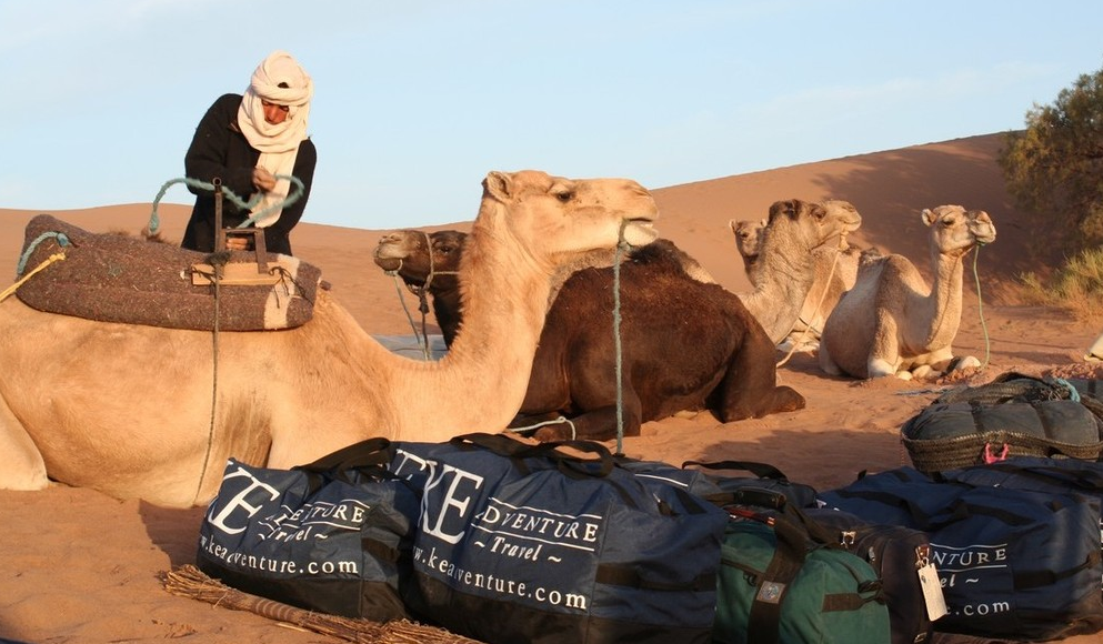 camel safari for families