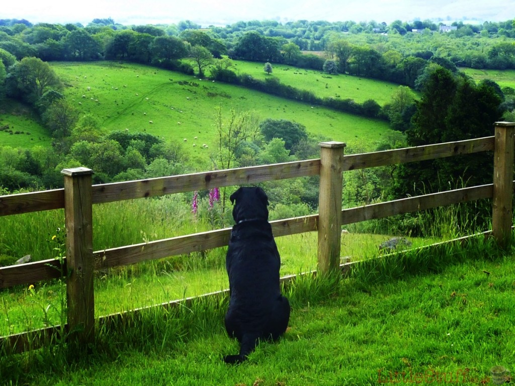 Waiting for those sheep to come and play.