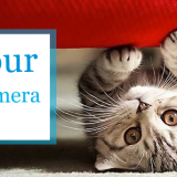 Show us your #PetsCaughtOnCamera and WIN!