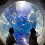 Gear up for a fun filled and adventurous August bank holiday weekend at The National Sea Life Centre Birmingham