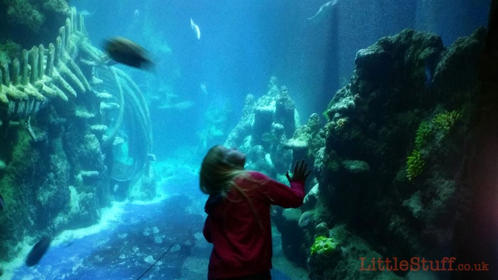 london-aquarium-big-tank