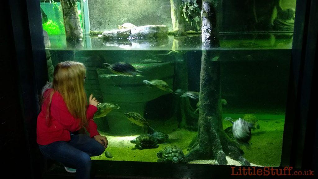 london-aquarium-turtles