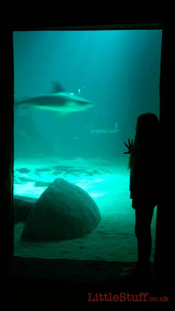 london-shark-atank