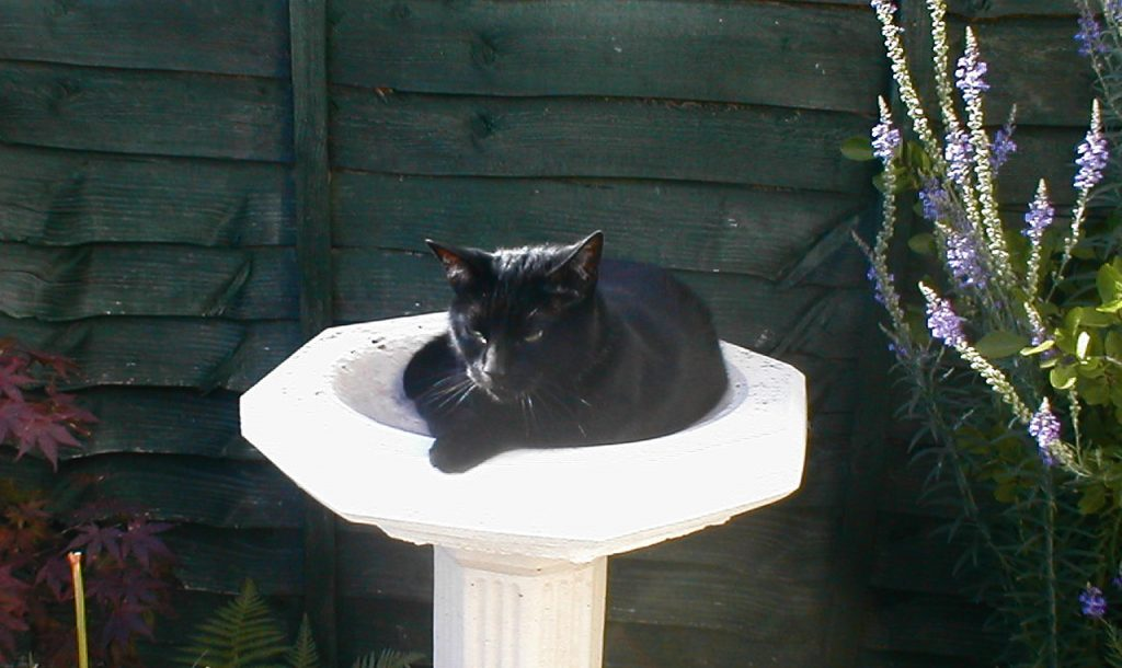 black cat sleeping in bird bath