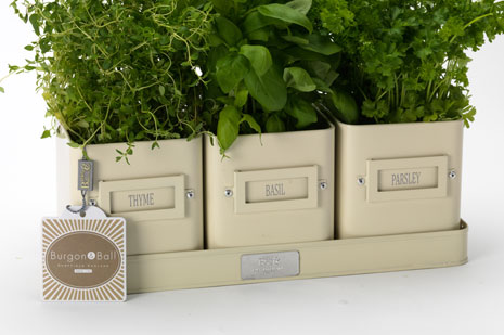 burgon & Ball Cream herb Pots