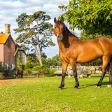 The best days out in the New Forest