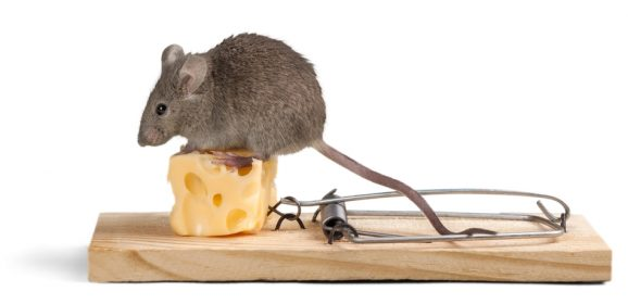 How to trap even the smartest rat