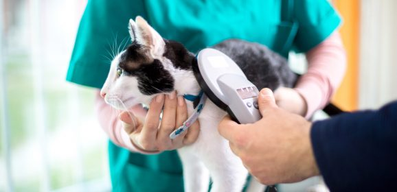 How technology has revolutionised the pet care industry