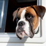 5 Reasons For A Caravan Holiday | Campbell Caravans