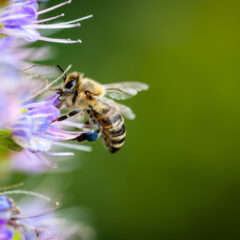 The Importance Of Bees: Why You Should Never Kill A Bee