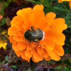 Come on, pledge to help the bees #PlantAPot